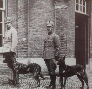 Dutch Shepherd before WWII
