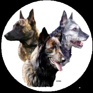 American Dutch Shepherd Association