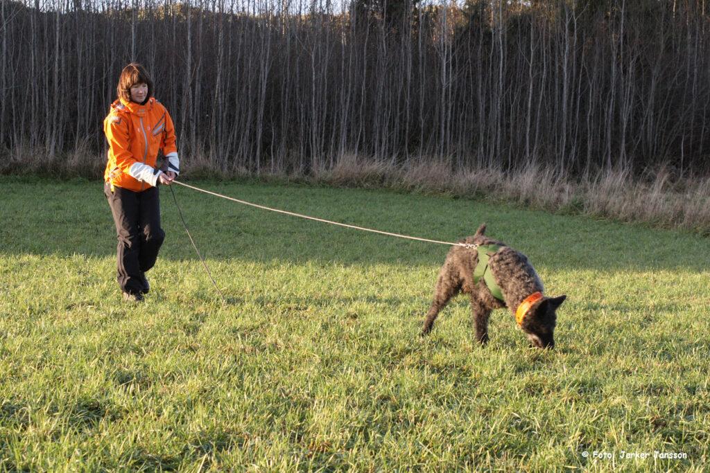 Dutch Shepherd Tracking